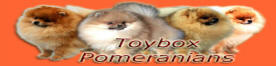 Welcome to Toybox Pomeranians